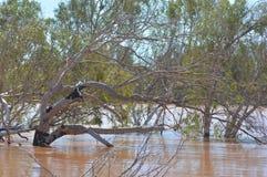 Rzeka w powodzi Zdjęcia Stock