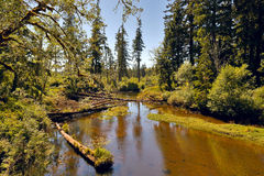 Rzeka w pustkowiu Zdjęcie Royalty Free