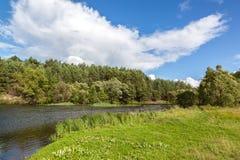 Rzeka w sosnowym lesie z piaskowatą plażą Zdjęcia Royalty Free