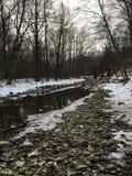 Rzeka w tajdze jest nieporuszonym naturą, pokazuje swój okazałość w wszystkie swój chwale Bajki miejsce kantuje dokąd chce przych Zdjęcie Royalty Free