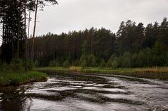 Rzeka w tle lasowej zieleni drzewa Zdjęcia Royalty Free