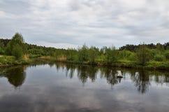 Rzeka w tle lasowej zieleni drzewa Obrazy Stock
