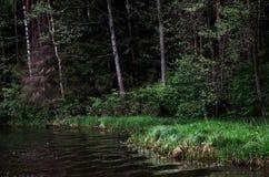 Rzeka w tle lasowej zieleni drzewa Zdjęcie Royalty Free