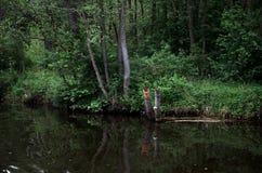Rzeka w tle lasowej zieleni drzewa Obraz Royalty Free
