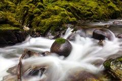 Rzeka w Tollymore lasu parku Obrazy Stock
