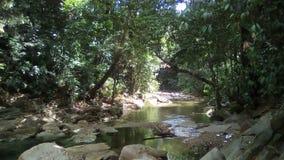 Rzeka w Trinidad i Tobago obrazy royalty free