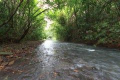 Rzeka w tropikalny las deszczowy Zdjęcie Royalty Free