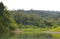 Rzeka w tropikalnym lesie deszczowym w Costa Rica Obrazy Royalty Free