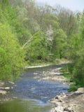 Rzeka w wiosna lesie Obrazy Royalty Free