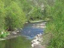 Rzeka w wiosna lesie Fotografia Royalty Free