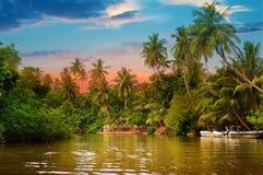 Rzeka, wschód słońca i tropikalne palmy, fotografia royalty free
