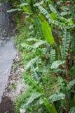 Rzeka z bananowego drzewa liściem na bocznej fotografii w jogja Indonesia Fotografia Royalty Free