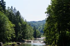 Rzeka z gwałtownymi i kamieniami wśród iglastych lasów Fotografia Stock