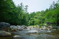 Rzeka z kamieniami i drzewami Obraz Royalty Free