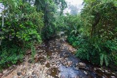 Rzeka z małą wodą Zdjęcie Royalty Free