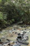 Rzeka z skałami po środku zielonych lasowych drzew zdjęcie royalty free