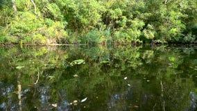 Rzeka z spadać wodnymi lelujami i liśćmi swobodny ruch zdjęcie wideo