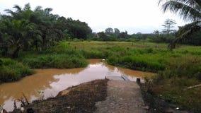Rzeka z tło lasem Fotografia Royalty Free