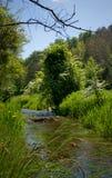 Rzeki i drzewa obrazy stock