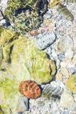 Rzeki i morza kamienie jako tło Zdjęcia Stock