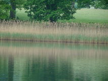 Rzeki i trawy odbicie Zdjęcie Stock