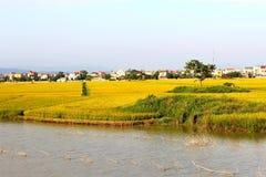 Rzeki, ryż pola dziewięć i domy, Obrazy Royalty Free