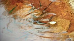 Rzeki ryba w wodzie, karmy na chlebie zdjęcie wideo