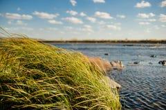 Rzeki, trawy i kamieni strzał w, fotografia stock