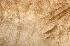 rzemienna tekstura Zdjęcia Stock