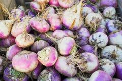 Rzepy na gospodarstwie rolnym lub rynku zdjęcie stock