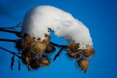 rzepy zakrywający śnieg obraz royalty free