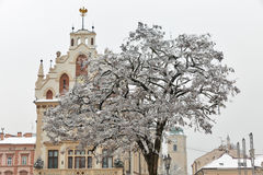 Rzeszow Town Hall, Poland. Town Hall with decorated Christmas trees in Rzeszow. Poland Stock Photos