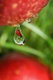 rzuć owoców Zdjęcie Royalty Free