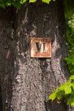 Rzym liczba pięć na drzewie Zdjęcie Stock