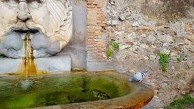 Rzym, pomarańcze ogród zbiory wideo