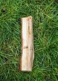rzymski liczebnik Romańscy liczebniki robić od dębu Stare drewno liczby Stara rzymska antykwarska abecadło liczba na zielonej tra fotografia stock