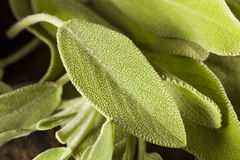 Sábio orgânico verde cru Foto de Stock