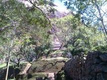 Sátiras de escalada de Sigiriya entre árvores foto de stock
