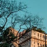 São保罗,巴西precture的大厦  库存照片