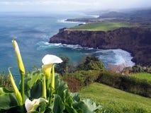 São Miguel, la isla verde - Azores Foto de archivo libre de regalías