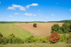 São cores do outono. Fotos de Stock