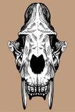 Säbel-Zahn-Katze-Schädel Stockfoto