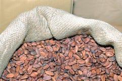 Säck från jute som fylls med kakaobönor Arkivbilder