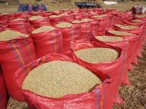 Säcke Reis während der Ernte stockfotografie