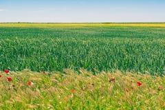 Sädes- fält i Spanien under våren Castilla y Leon arkivfoto