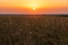 Sädes- vetefält på soluppgång Royaltyfria Foton