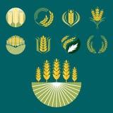 Sädesslag gå i ax och för korn det åkerbruka organiska naturliga symbolet för den bransch- eller för mat för vektor för logoemble Royaltyfri Fotografi