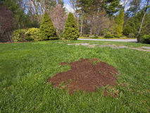 Säen eines Fleckens des Rasens Stockbilder