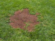 Säen eines Fleckens des Rasens Lizenzfreie Stockfotografie