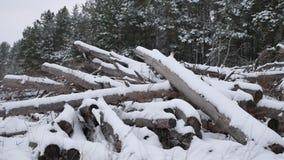 Sägemühlenklotz von Kiefern im Schneewinterwaldweihnachtsnaturbaum gestalten landschaftlich stock footage